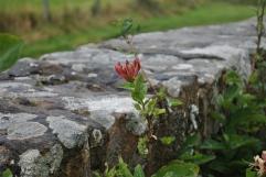 Ardersier graveyard, Inverness