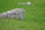 Jarlshof graves (19)