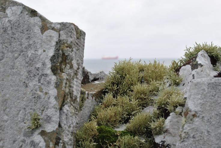 Quarff graveyard, Shetland (5)