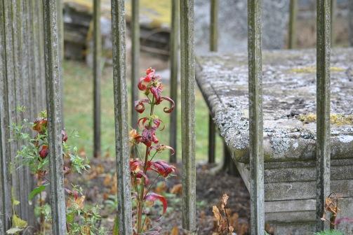 St Callan's cemetery, Rogart