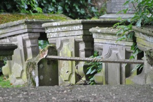 Tain old graveyard (10)