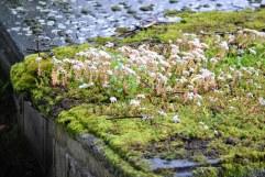 Inverness graveyard (12)