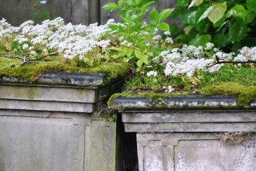 Inverness graveyard (14)