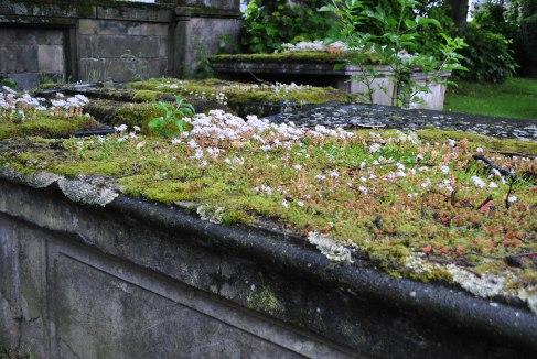 Inverness graveyard (7)