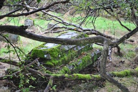 Chapelton Burial Ground (35)
