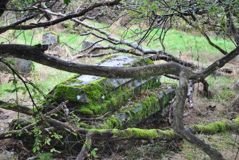 Chapelton Burial Ground (35)