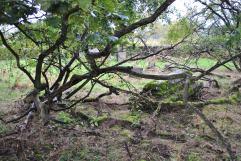 Chapelton Burial Ground (38)