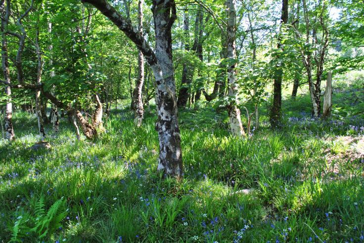 Inishail, Loch Awe (14)