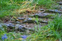 Inishail, Loch Awe (73)