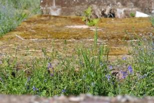 Cnocan Burra burial site, Drumnadrochit (17)