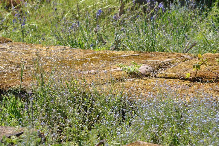 Cnocan Burra burial site, Drumnadrochit (19)