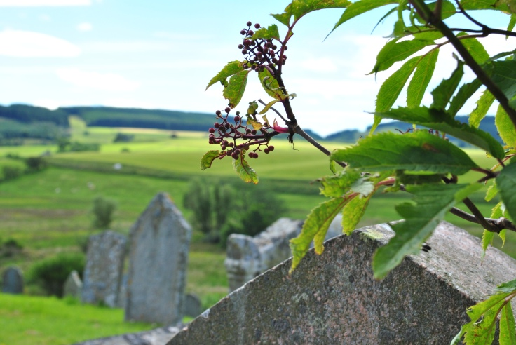 Kildrummy old churchyard bathed in summer sunlight is a beautiful place to be and rest. Final resting place graves are often called; here we finally rest, when we have left this earth.