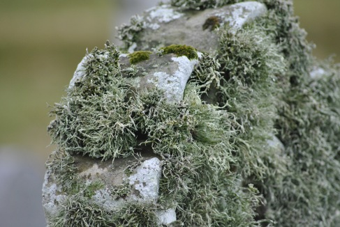 Isbister graveyard, Shetland Mainland (11)