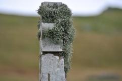Isbister graveyard, Shetland Mainland (12)