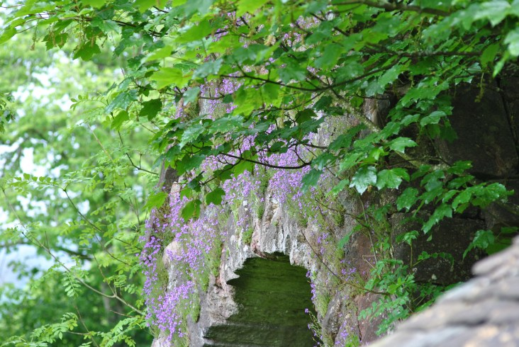 The wide impressive portal covered in bellflower is a sight of sheer beauty in summer. The bell bears the arms of the Graham family and dates back to the 15th century, therefore it is much older than the gable in which it was fitted.