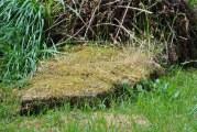 Leckine Burial Ground, MacLaren (12)