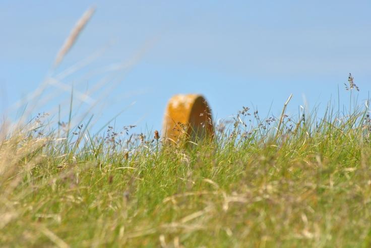 tip of gravestone behind summer grass