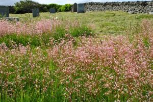 wild flowers on graves