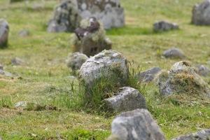 marker stones on graveyard