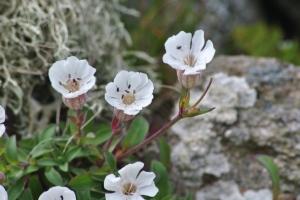 white flowers on graveyard