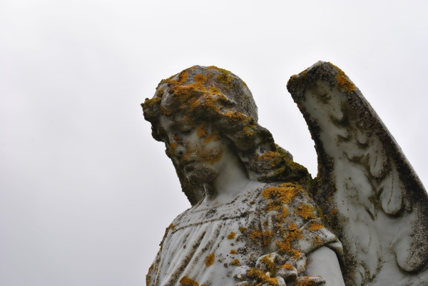 angel moss lichen graveyard grey sky