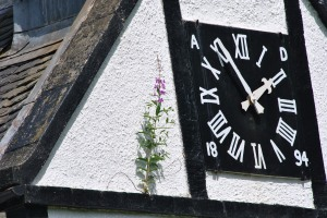 church clock and fireweed