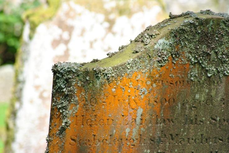 sun lichen gravestone