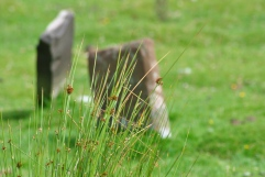 gravestones out of focus