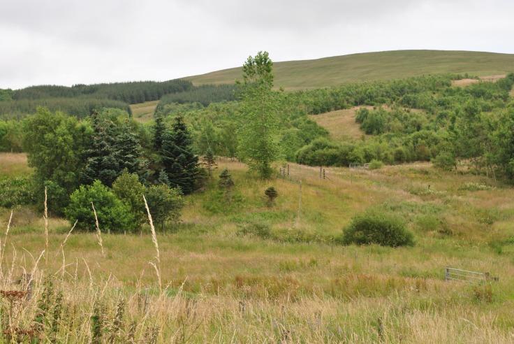 Border Landscape
