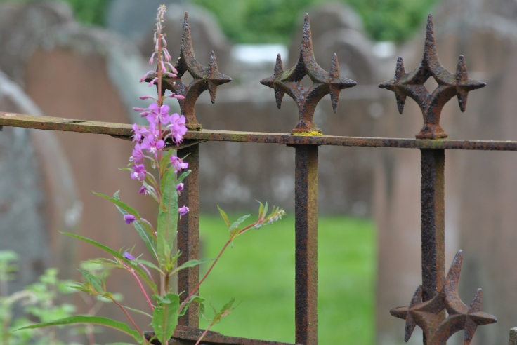 fireweed on grave