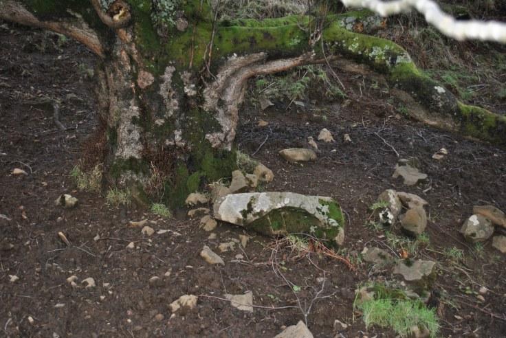 earth disused graveyard
