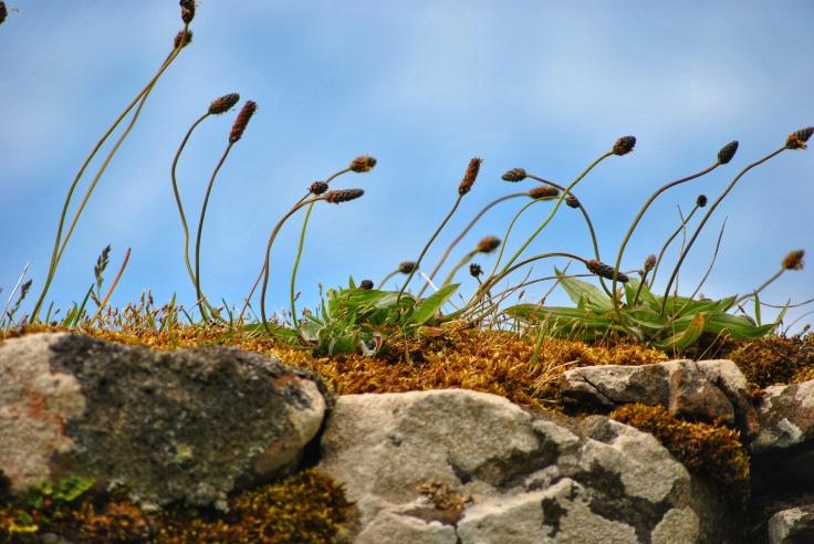 Kilmuir graveyard Isle of Skye